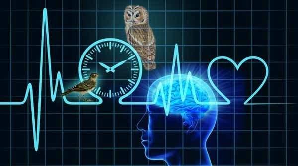 биологические ритмы и сон